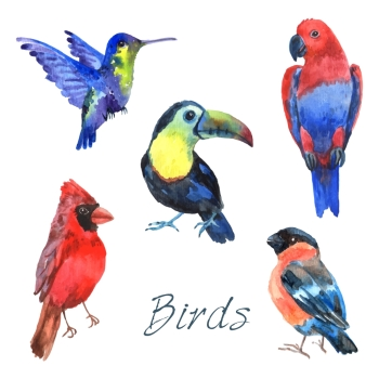 Tropical rainforest parrot birds with beautiful plumage and curved beaks watercolor pictograms collection abstract isolated vector illustration Exoti