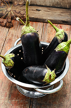 Summer crop of aubergine Harvest summer vegetables eggplant on wooden background in rustic style