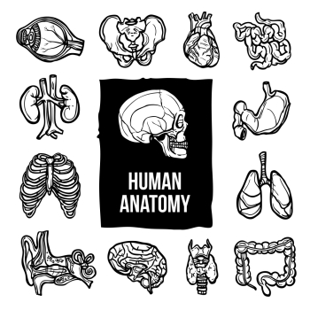 Human anatomy internal body organs sketch decorative icons set isolated vector illustration