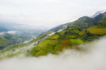 Paddy rice terraces agricultural fields in countryside or rural area of Mu Cang Chai Yen Bai mountain hills valley on summer in South East Asia Vi