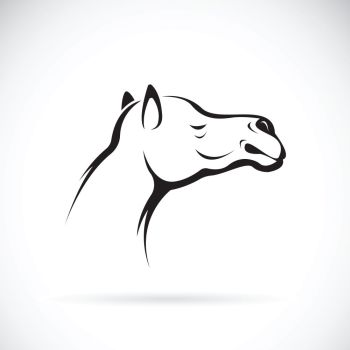 You searched for camel face front