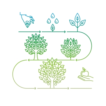 Vector infographics design elements and icons in linear style  business development and growth concepts  growing plant from seed to tree and apple f