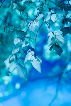 abstract background with blue leaves