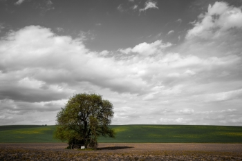 Big tree over cloudy sky Nature vintage background