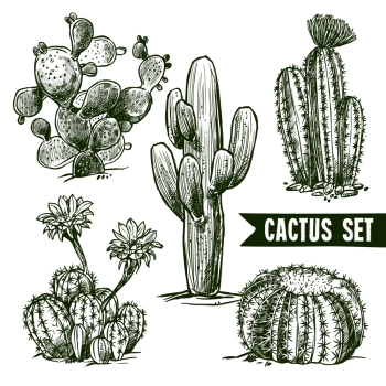 Different shapes desert and domestic cactus sketch set isolated vector illustration Cactus Sketch Set