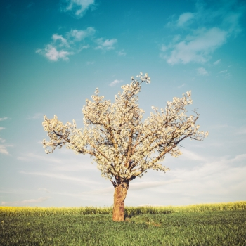 Vintage style image of field tree and blue sky Nature background