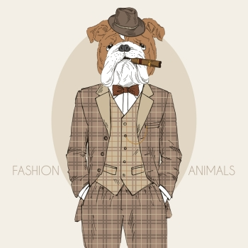 English bulldog dressed up in tweed suit