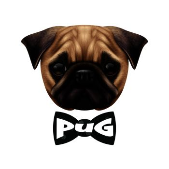 0ef181e6662f Colored isolated realistic pug dog portrait with big cute head and the bow  tie vector illustration