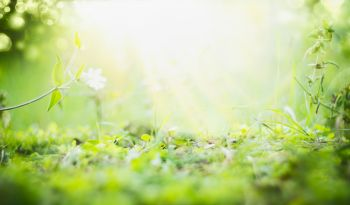 Sunny summer background with green grass  sun shine and bokeh