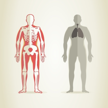 Human anatomy and skeleton A vector illustration