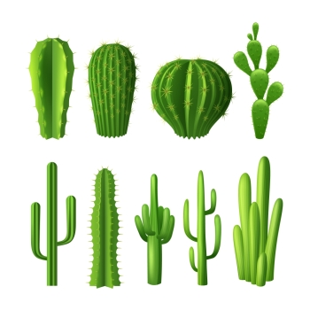 Different types of cactus plants realistic decorative icons set isolated vector illustration Cactus Realistic Set