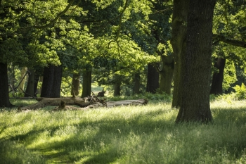 Beautiful shallow depth of field landscape of lush green forest in Summer