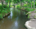 River Passing Through Forest in Iwate Prefecture  Japan