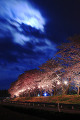 Cherry trees at Yusa town  Yamagata Prefecture