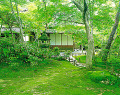 Japanese Garden Covered With Moss