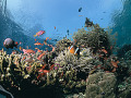 School of fish and coral reef