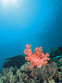 Light shining on coral reef