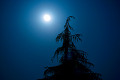Moon in Night Sky with Silhouette of Tree