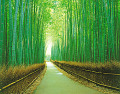 Path Through A Bamboo Forest