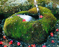 Water Spring With Stone Basin Covered With Moss