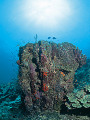 Light shining on coral reef and school of fish