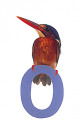 Kingfisher Perched on Number Zero