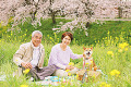 Middle-Aged Couple Having Picnic In Park