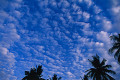Coconut trees and clouds