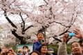 Cherry blossom viewing in Ueno Park in Tokyo April 3  2016  Tokyo  Japan - People stroll under fully bloomed cherry blossoms at a park in Tokyo on Sunday  April 3  2016. Despite the rain  people enjoyed cherry blossom viewing party.  Photo by Yoshio Tsunoda/AFLO  LWX -ytd-