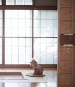 Dog at traditional Japanese hotel