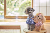 Dogs at traditional Japanese hotel